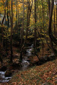 Autumn Photography, Outdoor Photography, Beautiful World, Beautiful Places, Nature Photos, Nature Background Images, Nature Images, Landscape Photographers, Australia Travel