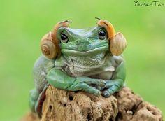 new earphone