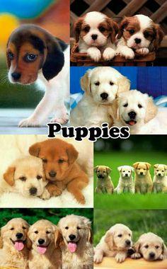 Puppies dog