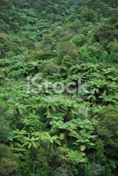 Lush Punga Fern Bush, New Zealand Royalty Free Stock Photo Maori Words, Abel Tasman National Park, Turquoise Water, Lush Green, Native Plants, Image Now, Ferns, New Zealand, Coastal