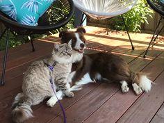 Cats, Animals, Gatos, Kitty Cats, Animaux, Animal, Cat, Animales, Kitty