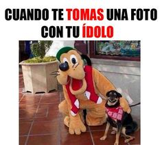 Memes-Graciosos-y-Divertidos-De-Animales-Para-Facebook-2016.jpg (567×510)