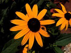 #Flowers #beautiful Flowers, Plants, Beautiful, Plant, Royal Icing Flowers, Flower, Florals, Floral, Planets