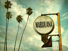 2016 California Marijuana Legalization: Will it Be Good for Marijuana Growers?