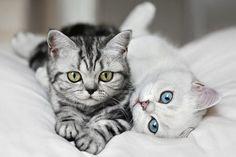 Cats, Tabby, White
