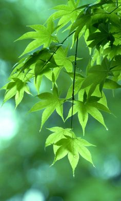 Off Rest of Chat After Free 2 Minute Psychic Reading from PowerCoach at Oranum Exclusive Bonus: Get off on first chat and Free 19 Min Psychic Reading + Off Rest of Chat Photo Background Images, Photo Backgrounds, Green Backgrounds, New Nature Wallpaper, Mint Green Walls, Let's Make Art, Rock Flowers, Foto Transfer, Leaf Images
