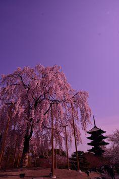 To-ji, Kyoto, Japan