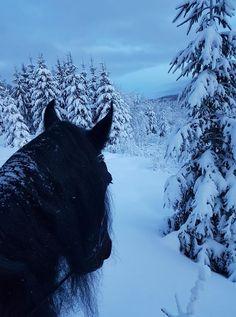 Miranda Bouwman in As Seen Through Horses' Ears. Near Ringsaker, Hedmark, Norway. Åsmarka, Norway.