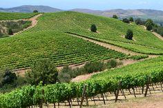 Valle del Maule, Ruta del Vino chileno - http://www.miviaje.info/valle-del-maule-ruta-del-vino-chileno/