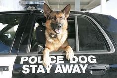 TAKE ACTION- Why Police Dogs Are Partners, Not Property! (donate to the National K-9 Working Dog organization now to help retired police dogs live out their lives in peace!)