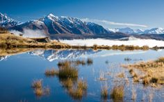 Bill✔️.   MacKenzie Country. South Island, New Zealand. Another very pretty image from South Island.  Chosen from the massive collection found on Pinterest!    (Research, Verification, Curation & Caption by @BillGP ) .  Bill Gibson-Patmore,  Bill ✔️