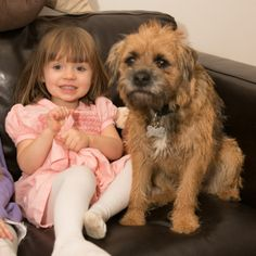 tag baxter365 13564685848 Cute Boarders, Border Terrier, Little Brown, Brown Dog, Terriers, Cute Animals, Children, Pretty Animals, Young Children