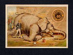 thread Advertising Trade card Jumbo elephant