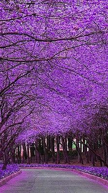 """..I think it pisses God off if you walk by the color purple in a field somewhere and don't notice it."""""""