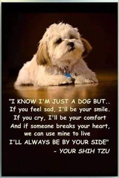 All About Playfull Shih Tzu Puppies Exercise Needs Cute Puppies, Cute Dogs, Dogs And Puppies, Doggies, Shih Tzu Puppy, Shih Tzus, Baby Shih Tzu, I Love Dogs, Puppy Love