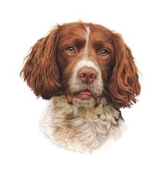Image result for dog portraits in coloured pencil