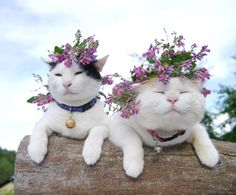Flower girls! They seem ok with wearing those flowers? My dog would try and eat them if I put flowers on his head ;)