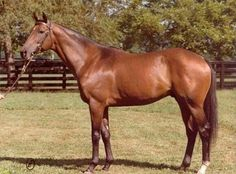 Stop the Music (USA) 1970-2005 B.h. (Hail to Reason (USA)-Bebopper (USA) by Tom Fool (USA) Winner of the Champagne S, Dwyer S, & Saratoga Special S