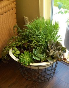 Planted these succulents in an ANTIQUE baby's bath tub. Then set it into a large metal basket.