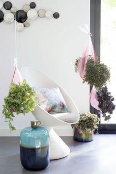 Hängende Zimmerpflanzen - Pflanzenfreude.de                              …