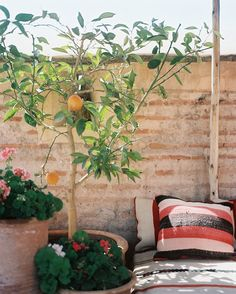 [Potted Orange Tree on Porch]