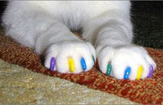 It might look like the result of a crazy cat lady's attempt at giving her BFF a pedi, but these Soft Paws were created as a solution to cat scratching and an alternative to declawing. Never again live in fear that your furry friend will claw you to death in your sleep — or is that just us?.