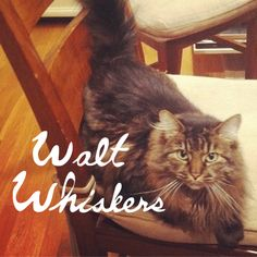 25 Literary Pun Names For Your Cat. This are amazing!