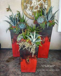 Succulent container arrangements by Megan Boone Succulents In Containers, Planting Succulents, Potted Plants, Succulent Plants, Succulent Display, Succulent Arrangements, The Great Outdoors, Container Gardening, Garden Design