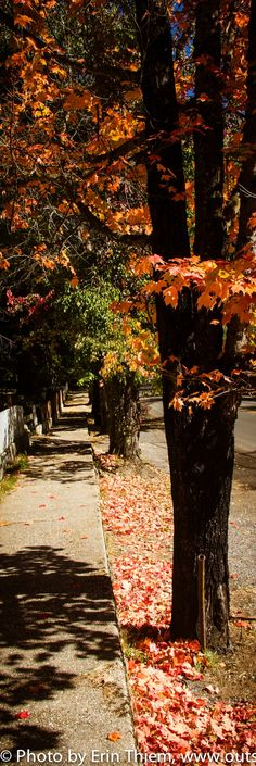 Nevada City Fall color is happening all over town, go for a walk and check out the trees.  Photo by Erin Thiem/Outside Inn