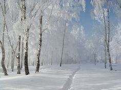русская зима фото: 6 тыс изображений найдено в Яндекс.Картинках