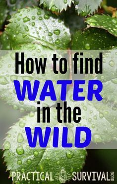 How to find water in the wild. Some good tips in here. Everything you needed to know about survival