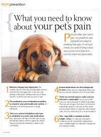 Dogs, and more so cats, do not show pain as we do. You need to be familiar with the signs.