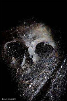 De Profundis | Bizzarro Bazar | Carlo Vannini #dark #macabre #photography #skull