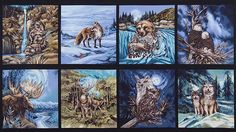North American Wildlife 3
