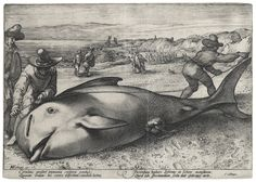 Pilot Whale by Unknown Artist (before Hendrick Goltzius)