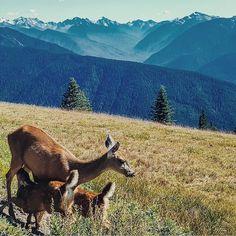 : @iamrumya  Download the free Olympic National Memorial app: chimani.co/olympic . . . #Nature #Outdoors #Parks #Chimani #MobileApp #Mobile #App #NationalPark #instagood #NationalParks #wild #America #PNW #ExplorePNW #VisitPNW #OlympicNationalPark #Travel #TravelGuide #Wilderness #Beautiful #Explore #Wanderlust #OlympicNP #Instagram #Instanature #Outside #Washington
