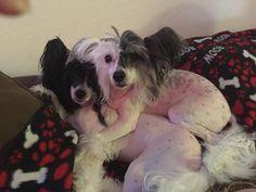 Dolly & Ecco