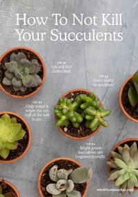 How to Not Kill Your Succulents