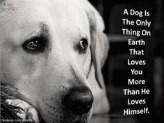 um cão é a única coisa na terra que te ama mais do que ele ama a si mesmo