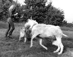 Sept  1970, Robert Plant at his Jennings Farm, Blakeshall, Kidderminster, Worcestershire.