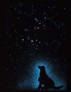StellaMurals :Glow in the Dark Star Poster - Canis Major and Canis Minor  - Astronomically Accurate - Glow in the dark art. $30.00, via Etsy.