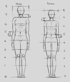 Drawing faces proportions fashion illustrations Ideas for 2019 Proportion Art, Drawing Body Proportions, Human Body Drawing, Human Anatomy Drawing, Body Reference Drawing, Human Anatomy Female, Anatomy Male, Human Anatomy For Artists, Pose Reference