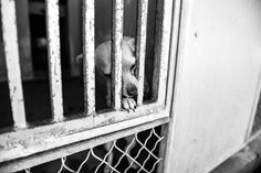 Sweetheart dog, who adores people, alone behind bars • Pet Rescue Report