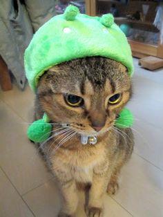 """""""IMG_3582.JPG  Aya A: 猫様、これが限界だったーーーー!かーーわーーえーーーーーー!!!www"""""""