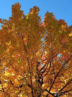 Foliage Canada