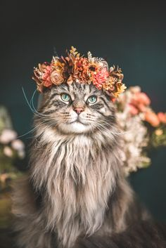 That smile. - your daily dose of funny cats - cute kittens - pet memes - pets in clothes - kitty breeds - sweet animal pictures - perfect photos for cat moms I Love Cats, Cute Cats, Kittens Cutest, Cats And Kittens, Kitty Cats, Image Chat, Cat Flowers, Cat Photography, Maine Coon Cats