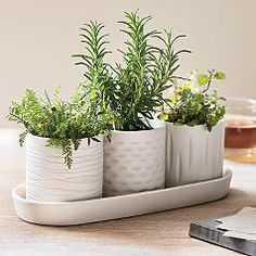 Grow your own herbs indoors