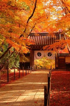 Autumn leaves at Komyo-ji Temple, Kyoto, Japan. Kyoto Japan, Japon Tokyo, Japan Japan, Japan Sakura, Japanese Landscape, Japanese Architecture, Beautiful World, Beautiful Places, Amazing Places