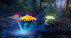 Magic Mushrooms: A Catalyst for Human Evolution Trippy Mushrooms, Wild Mushrooms, Stuffed Mushrooms, Psilocybin Mushroom, Mushroom Hunting, Human Evolution, Festival Camping, Fruit Garden, Visionary Art