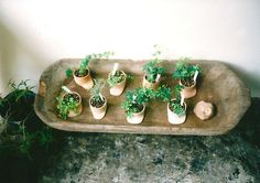 potted cuttings.